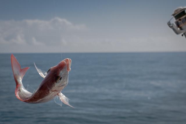 Pesca de fondo al volantín