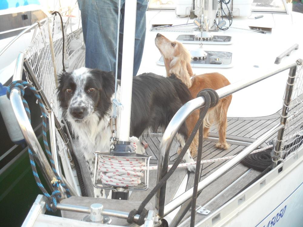 Mascotas a bordo del barco