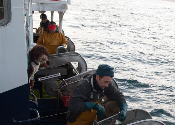 Perro de aguas cantabro a bordo de pesquero