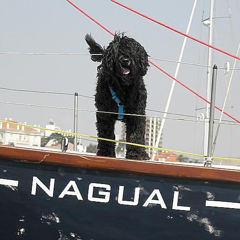 Perro de Agua Portugués negro a bordo de barco